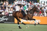 Final La Dolfina vs Ellerstina  5 chukker