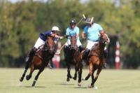 Tom Tailor vs Ellerstina