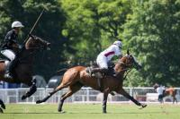Ellerstina vs Chapaleufu