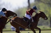 Equidiet vs Tosone polo team